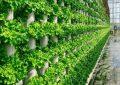 کشاورزی مدرن به شیوه عمودی؛ امکان نظارت بر هر شرایط محیطی